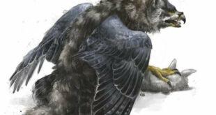 orel-volk