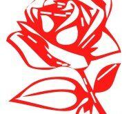 gadanie-na-roze